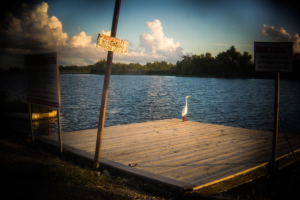 Egret_Bayou_Gauche_Louisiana_1181